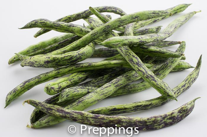 Ingredient Of The Day: Fresh Rattlesnake Bean