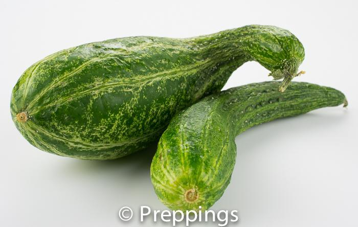 Ingredient Of The Day: Soyu Cucumber