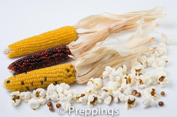 Ingredient Of The Day: Popcorn