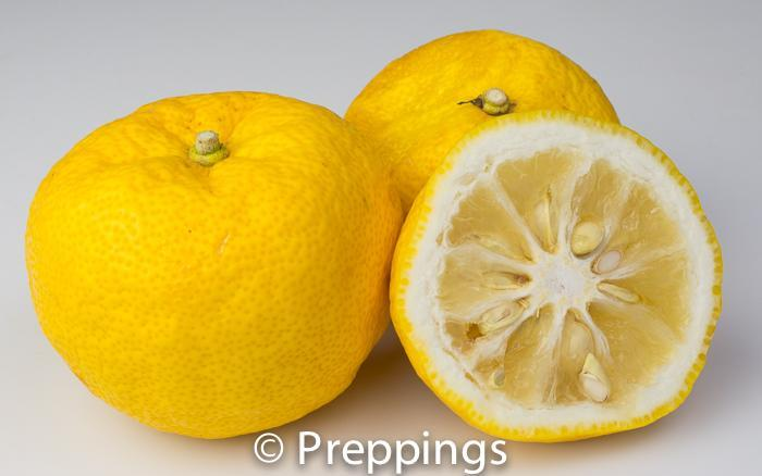 Ingredient Of The Day: Yuzu