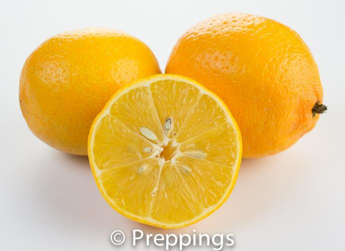Ingredient Of The Day: Chinese Bitter Orange