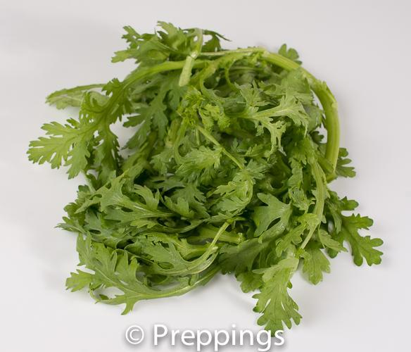 Ingredient Of The Day: Chrysanthemum Green