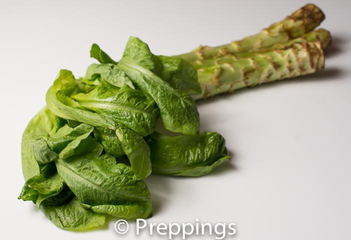 Ingredient Of The Day: Asparagus Lettuce