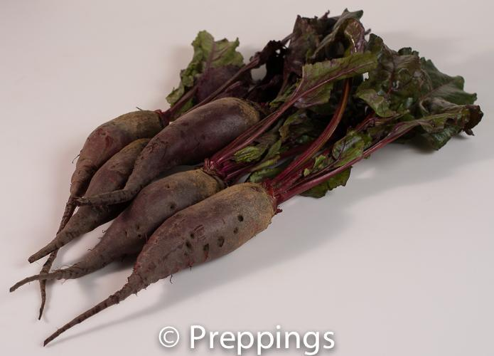 Ingredient Of The Day: Cylindra Beet