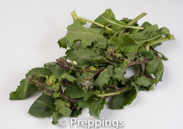 Ingredient Of The Day: Arugula Rapini