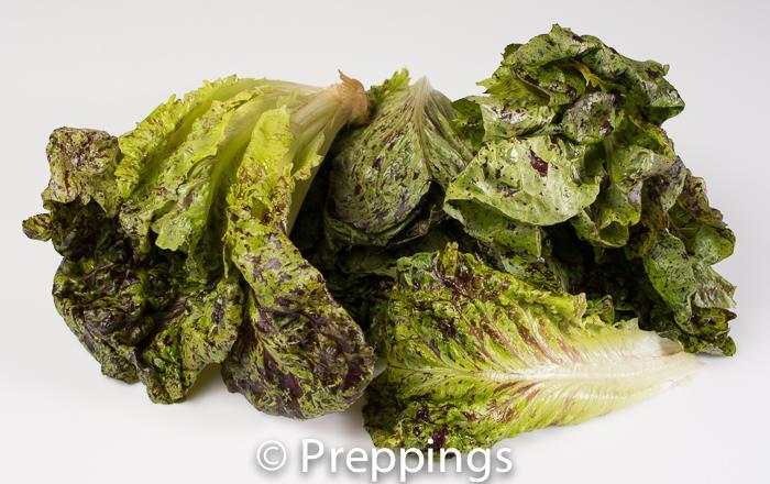 Ingredient Of The Day: Leopard Romaine Lettuce