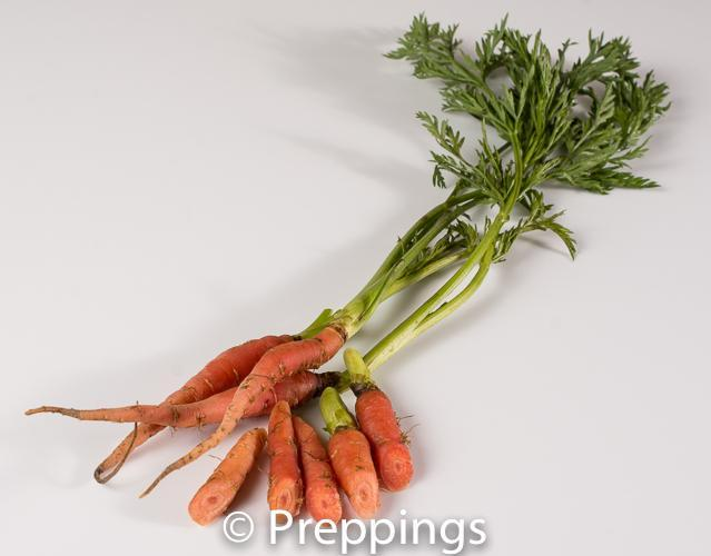Ingredient Of The Day: Baby Pink Carrot