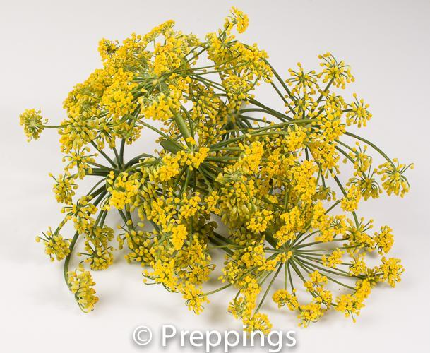 Ingredient Of The Day: Fennel Flower