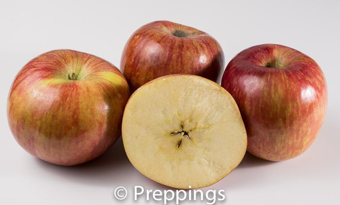 Ingredient Of The Day: Kiku Apple
