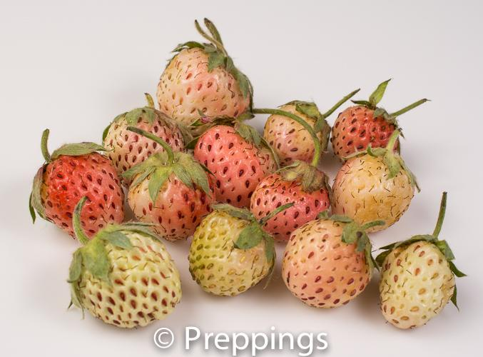 Ingredient Of The Day: Pineberry