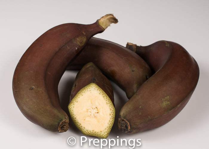Ingredient Of The Day: Red Banana