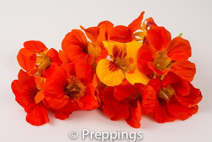 Ingredient Of The Day: Nasturtium Flower