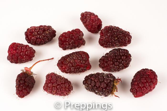 Ingredient Of The Day: Loganberry