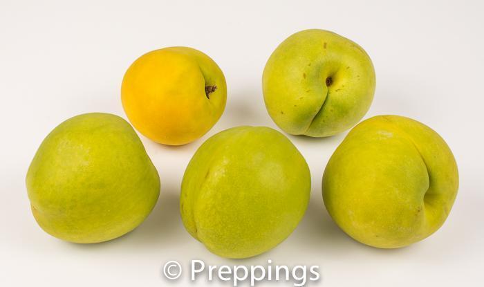 Ingredient Of The Day: Mango Nectarine