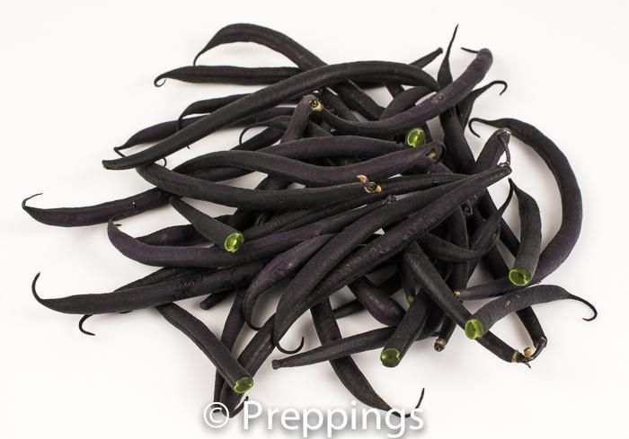 Ingredient Of The Day: Fresh Purple Bean