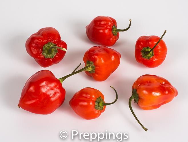 Ingredient Of The Day: Scorpion Chile Pepper