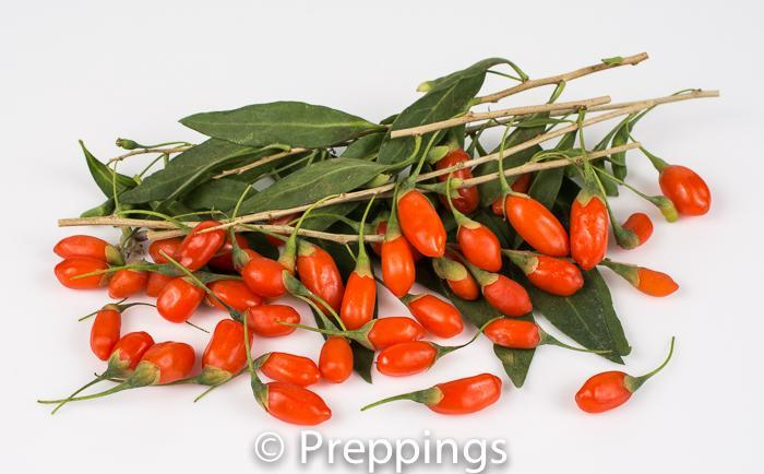 Ingredient Of The Day: Fresh Goji Berry