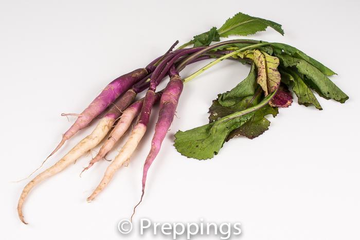 Ingredient Of The Day: Hinona Kabu Turnip