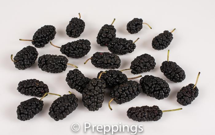 Ingredient Of The Day: Mulberry