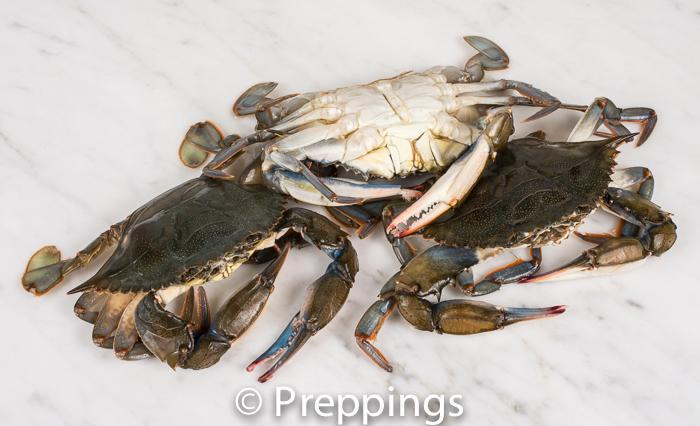 Ingredient Of The Day: Soft-Shell Crab