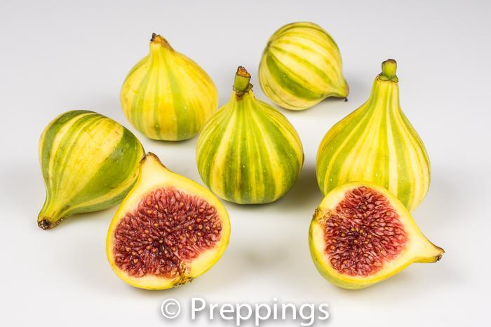 Ingredient Of The Day: Candy Stripe Fig