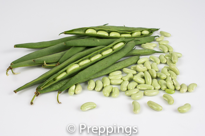 Ingredient Of The Day: Fresh Flageolet Bean