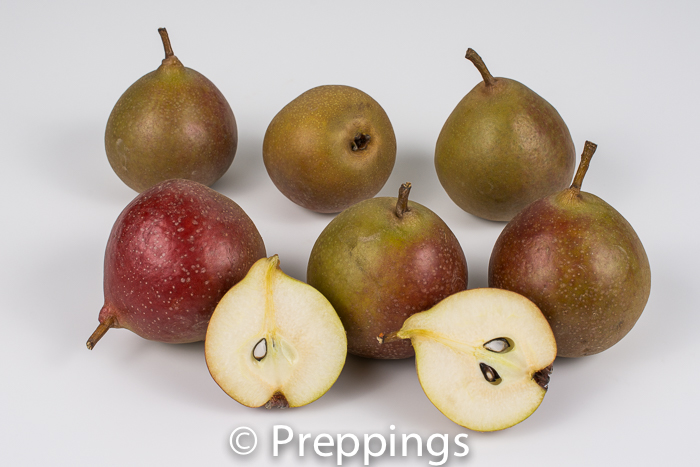 Ingredient Of The Day: Seckel Pear