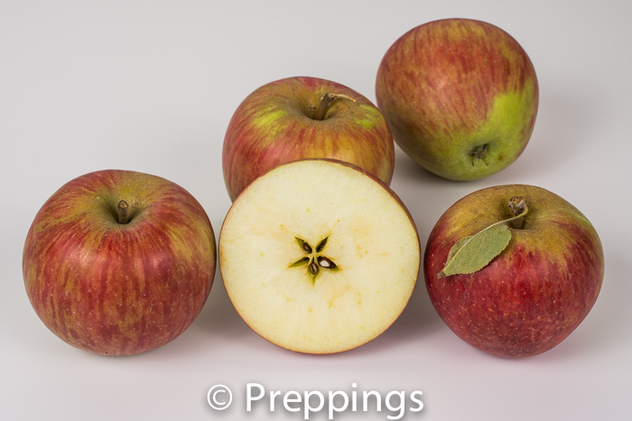 Ingredient Of The Day: Northern Spy Apple