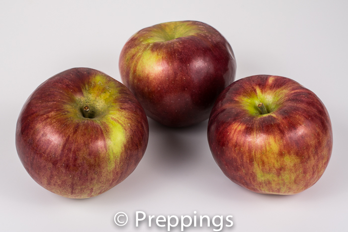 Ingredient Of The Day: Cortland Apple
