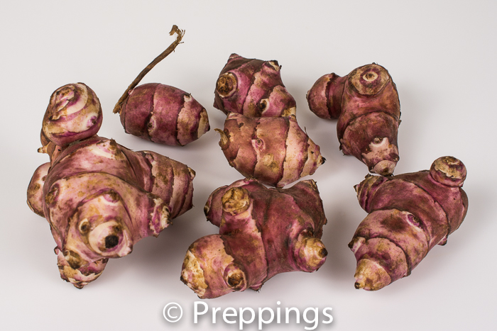 Ingredient Of The Day: Purple Jerusalem Artichoke