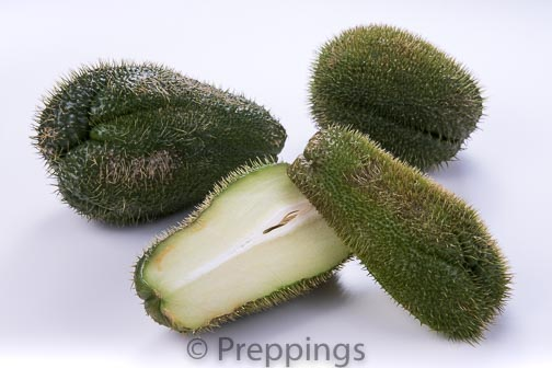 Ingredient Of The Day: Prickly Chayote Squash