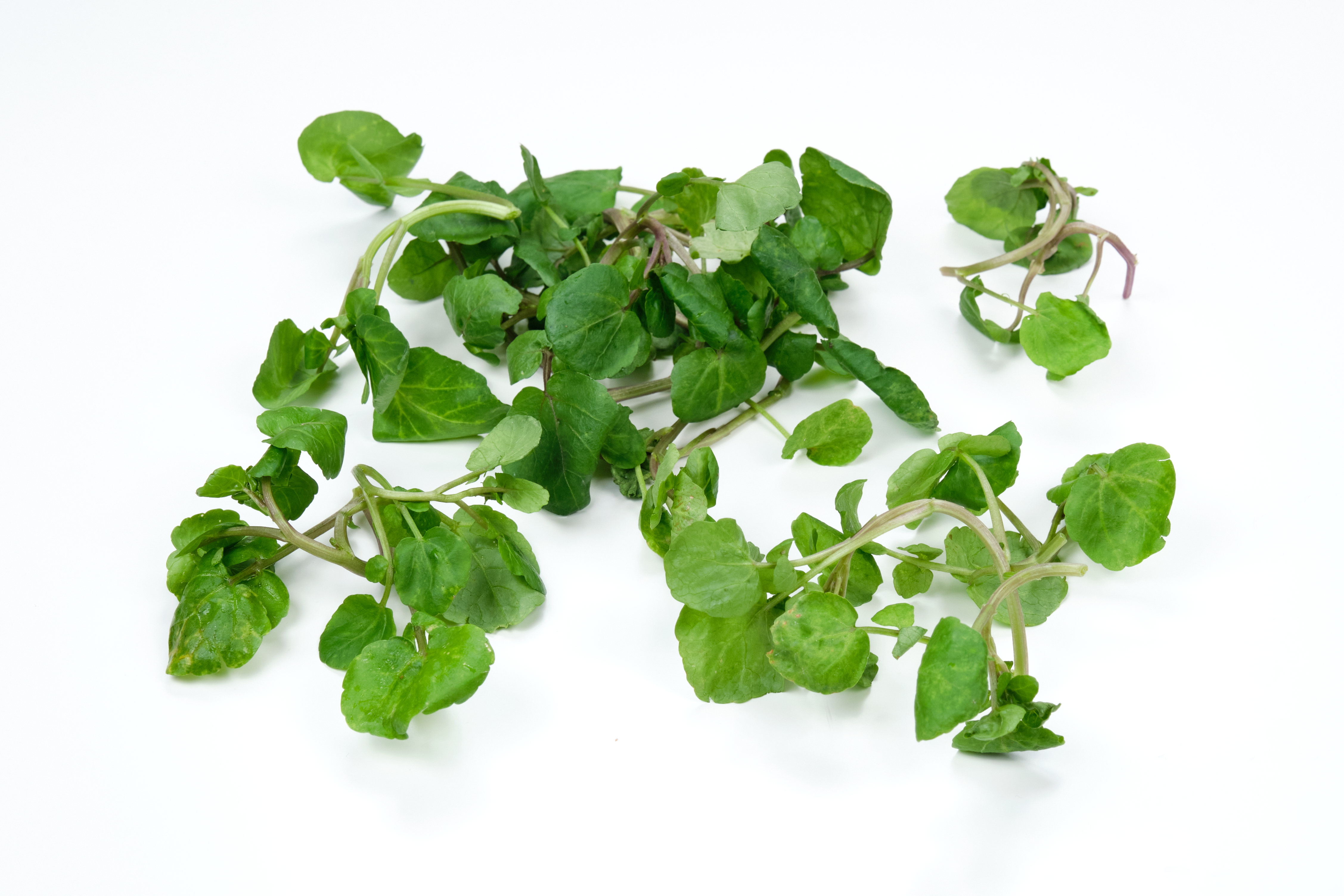 Ingredient Of The Day: Sausalito Watercress